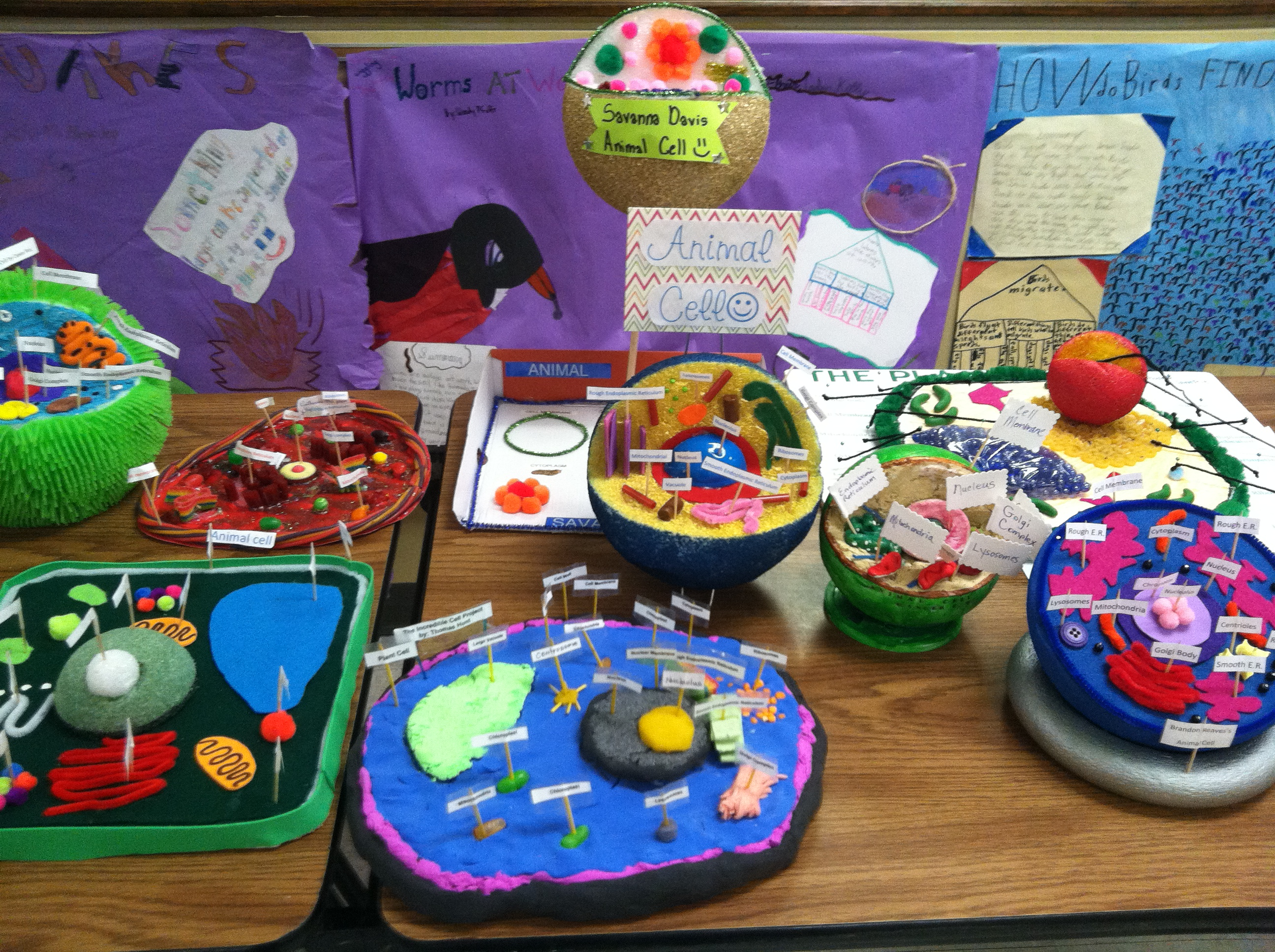 6th Grade Plant And Animal Cells Northpoint Christian School
