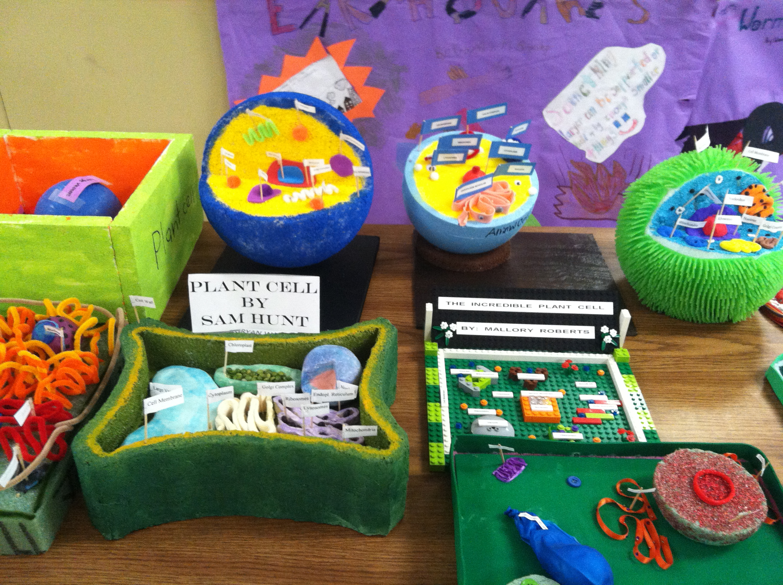6th grade plant and animal cells northpoint christian school cell projects 4 ccuart Choice Image